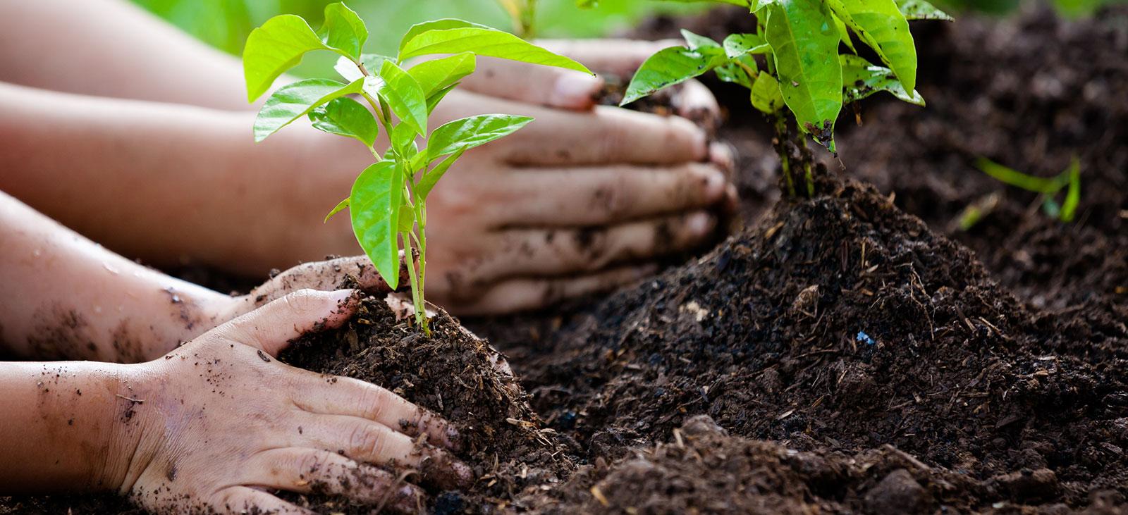 AlpaDur Boden und Pflanzendünger