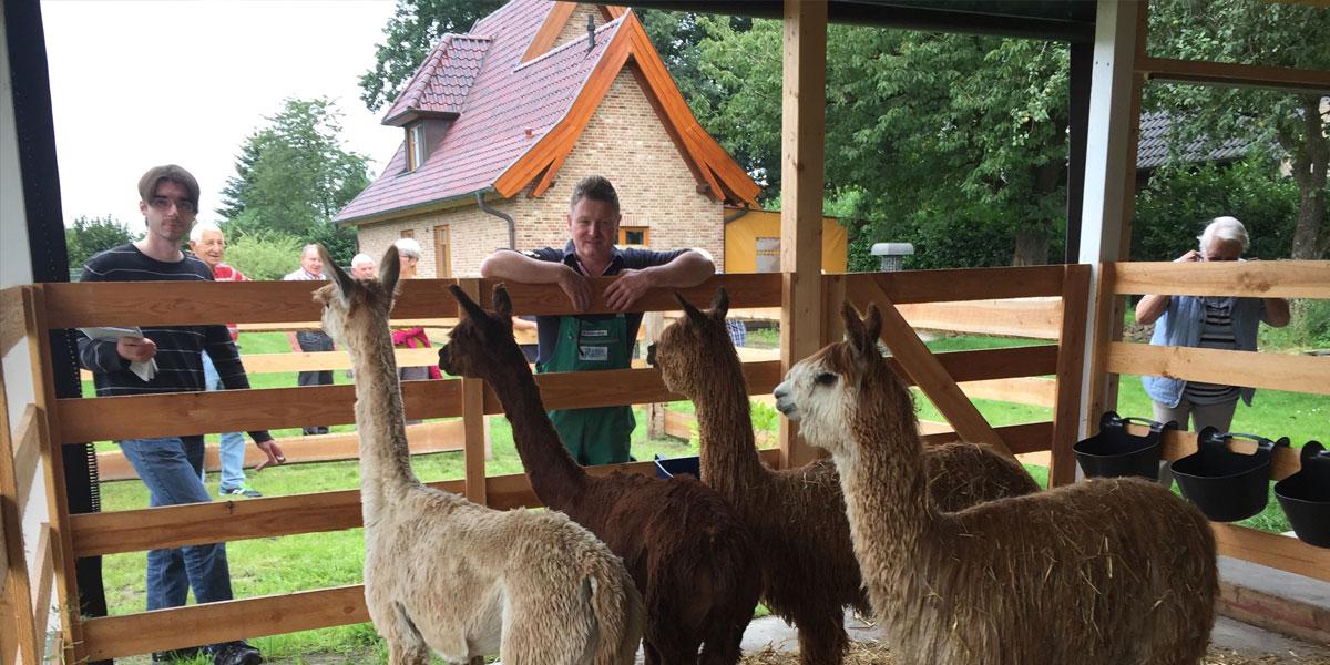 Tierkauf von Vechtetal Alpakas